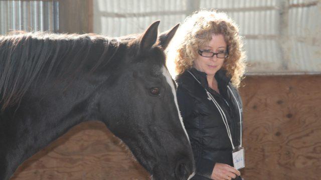 Horse Sense -  Julia crop